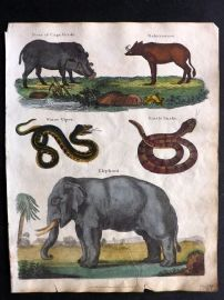 Goldsmith & Shaw 1817 Hand Col Print. Elephant, Boar of Cape Verde, Barbyroussa, Snakes